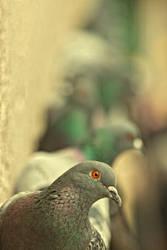 curiosity killed the bird by kavsikuzah