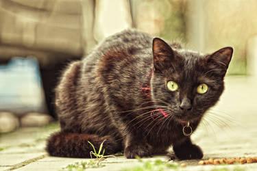 Funky Cat by kavsikuzah