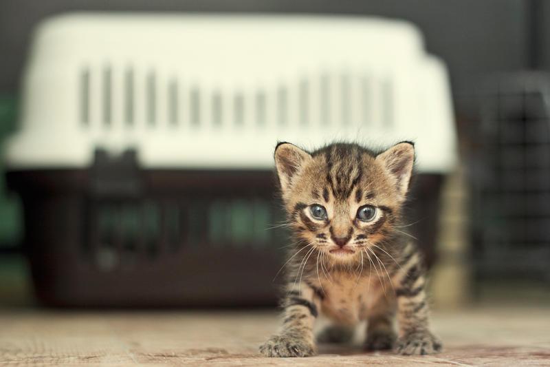 Kitty Blues by kavsikuzah