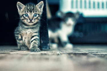 Chorus of kitties : Who are you by kavsikuzah