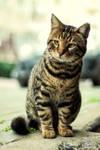 Catso