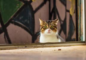 who's that cat by kavsikuzah