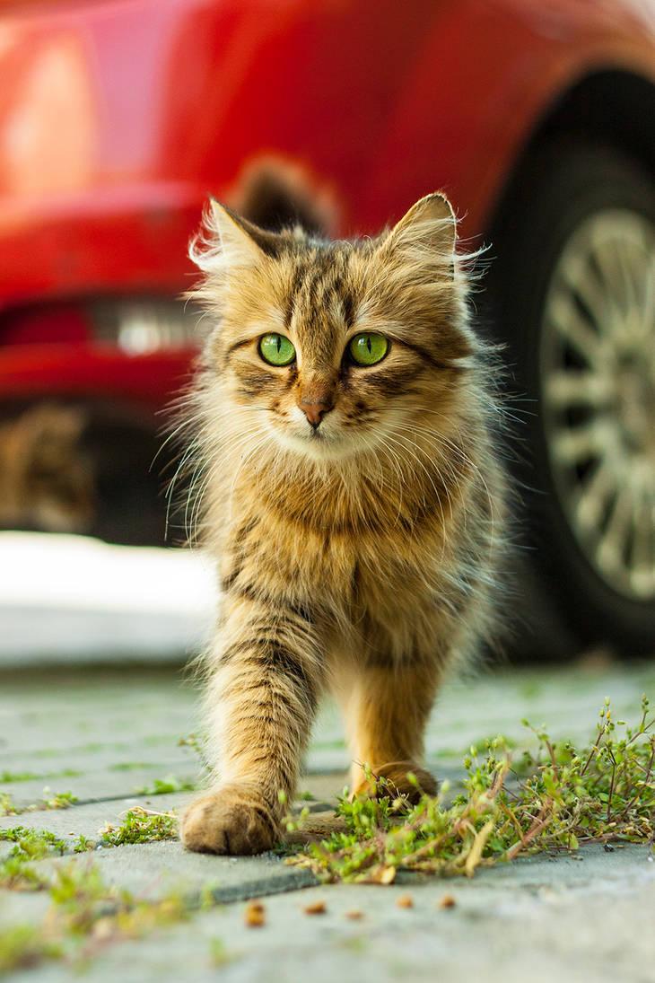 Cat n Red