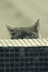 Big Cat Watch Us