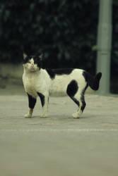Cat is Half White Half Black Half Dirty