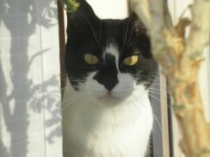 fattorieldreemu's Profile Picture