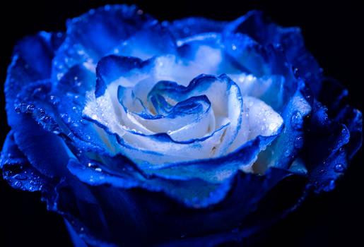 Bella Blue2