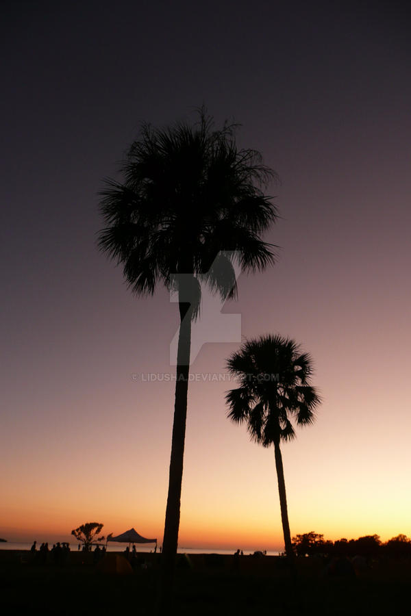 Towering Palms by Lidusha