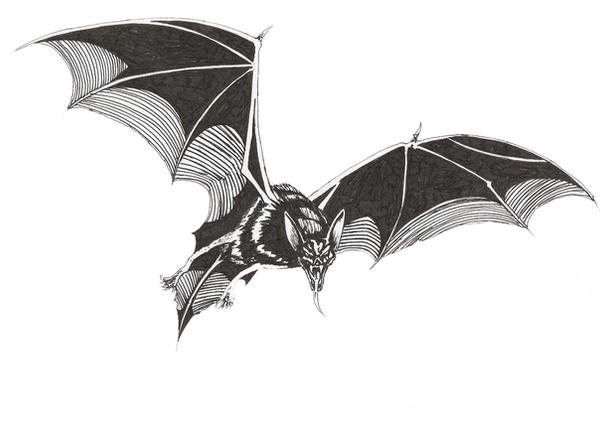 Vampire Bat tattoo by LordNightwalker on DeviantArt