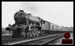 Sodor Rail Saga (Steam): NWR 4 Gordon