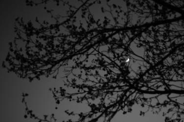 Moon by TaniMushroom