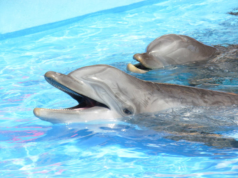 Dolphins by Feather-wolf on DeviantArt - photo#20