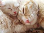 So sweet dream
