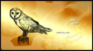 The Little Barn Owl by Jacia