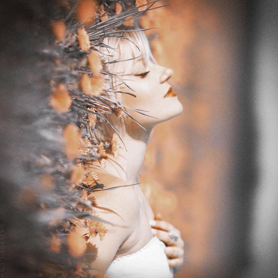 dreamdelion by GZB