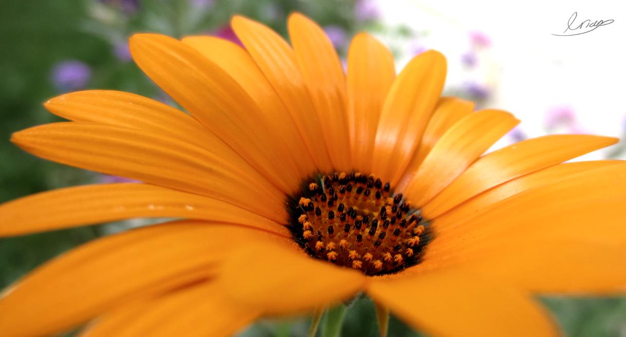Orange allergies. by Millendiator