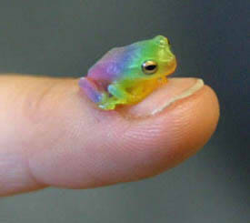 Rainbow Frog by satsuki-hana