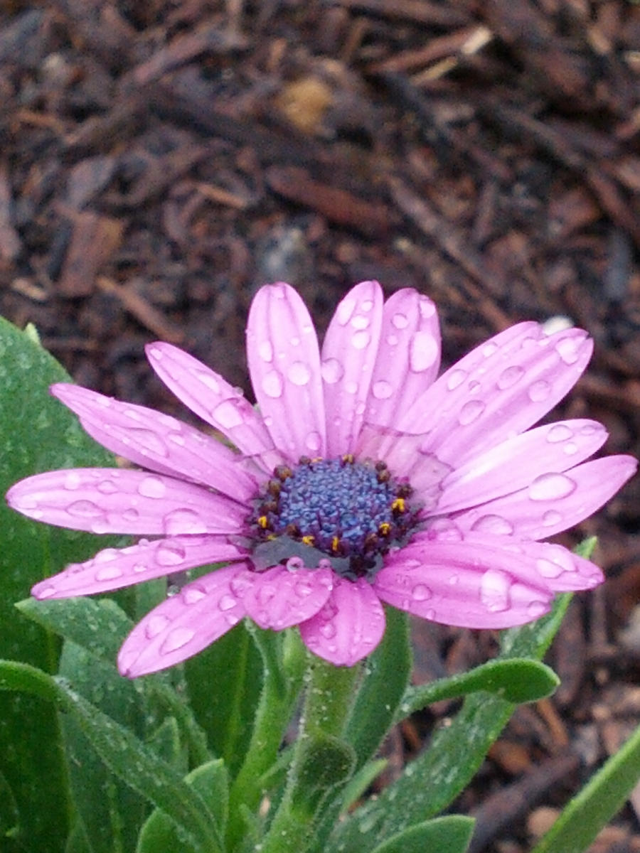 Purple flower by sarah0706