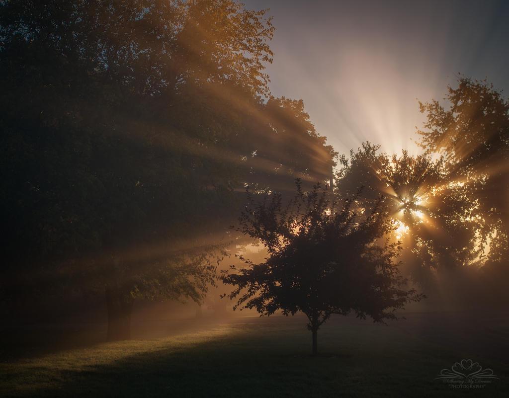 Morning Light by SharingMyDreams