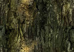 Tileable Bark Texture 1 by WittyDesign