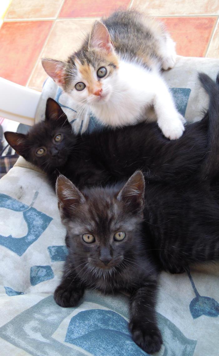 My Lovely Kitties by Georgya10
