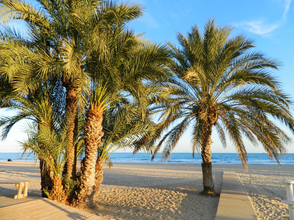 Take me back to Alicante by Georgya10