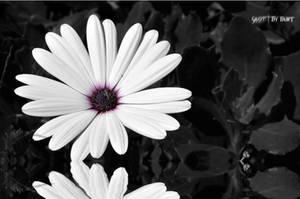 Flower Reflection by darkburt