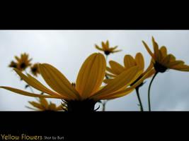 Yellow Flowers by darkburt
