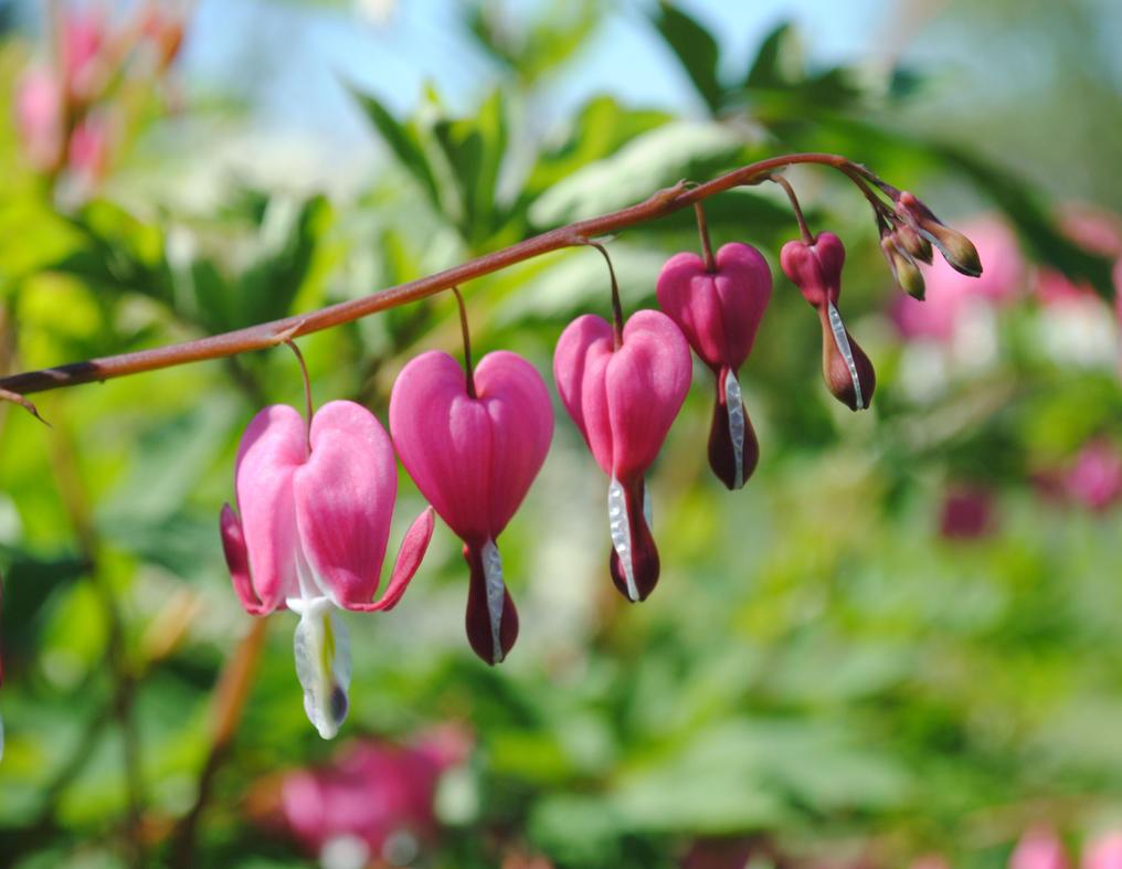 love heart shaped flowerflower - photo #16