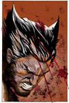 Colored Wolverine Close By Glaubermatos