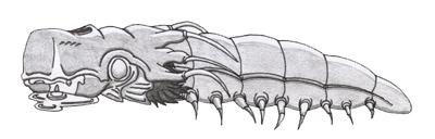 Little Sandworm by illuminatus-shadow