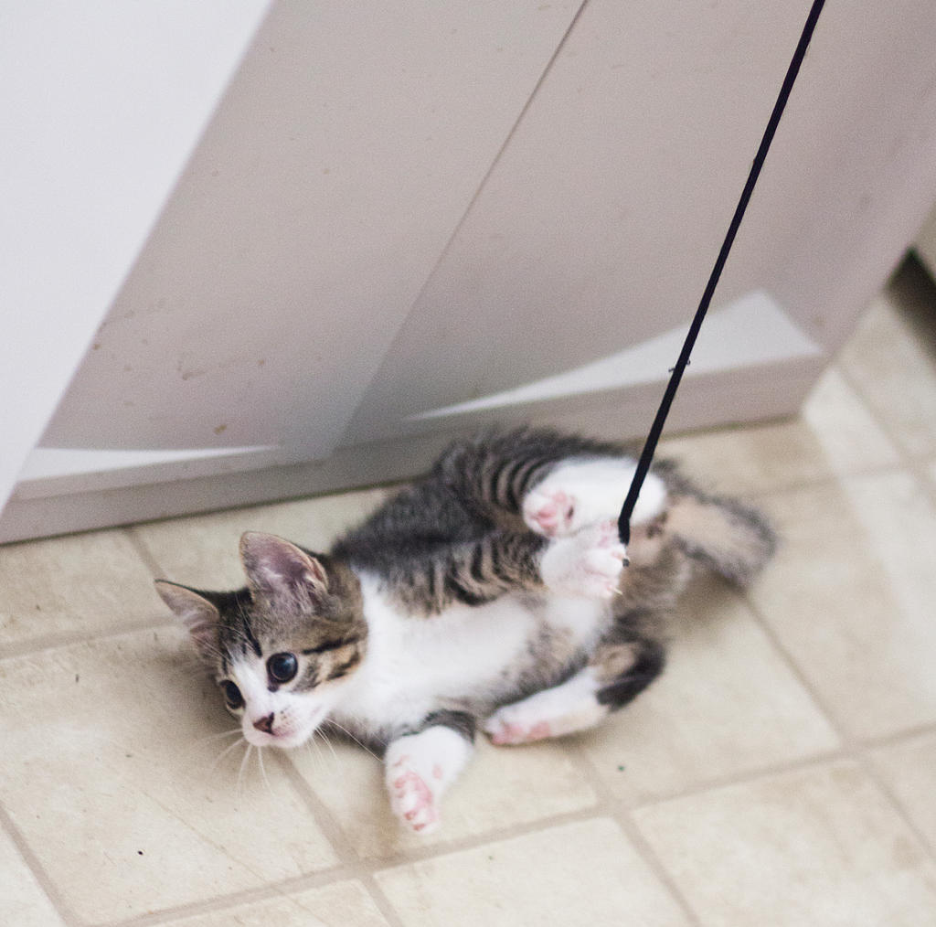 Kitten on a string by Sinned-angel-stock