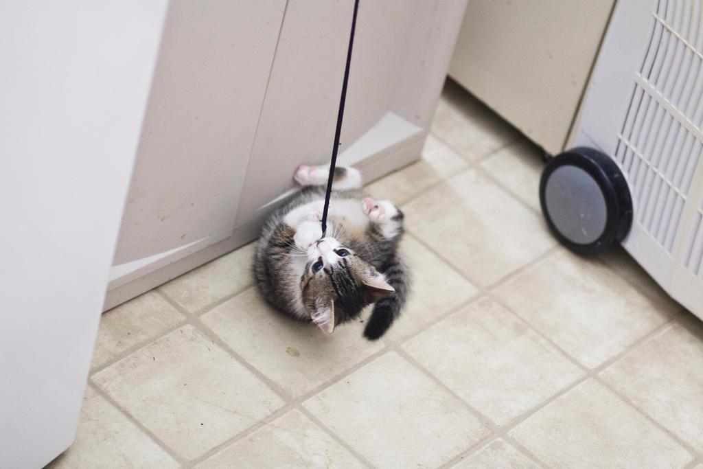 Kitten on a string 2 by Sinned-angel-stock