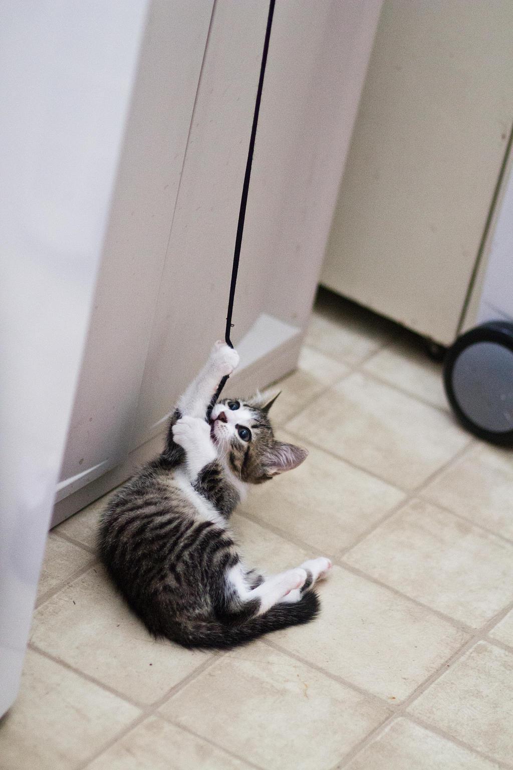 Kitten on a string 6 by Sinned-angel-stock