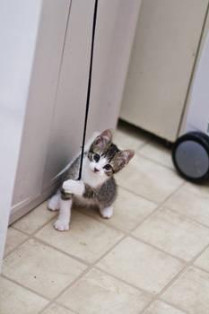 Kitten on a string 7