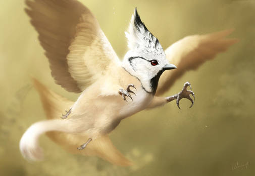 Crested Tit - Griffin