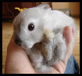 rabbit by vollyy
