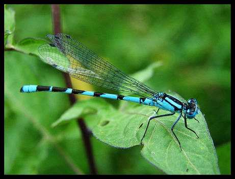 dragonfly favourites by vollyy on DeviantArt