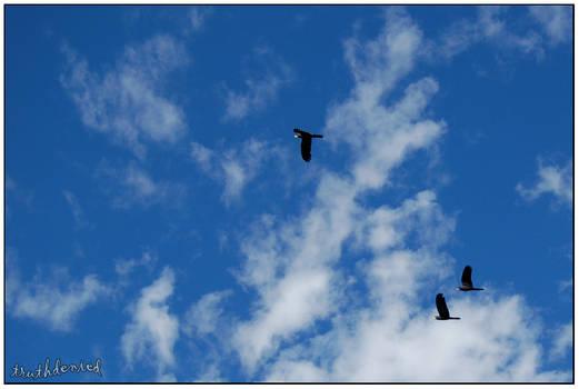 Soaring Skies