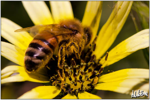 Tricky Bees-ness -2