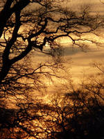 Sunset in Windsor Great Park