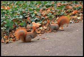 Squirrel Rendez - Vous by squirrelhollow