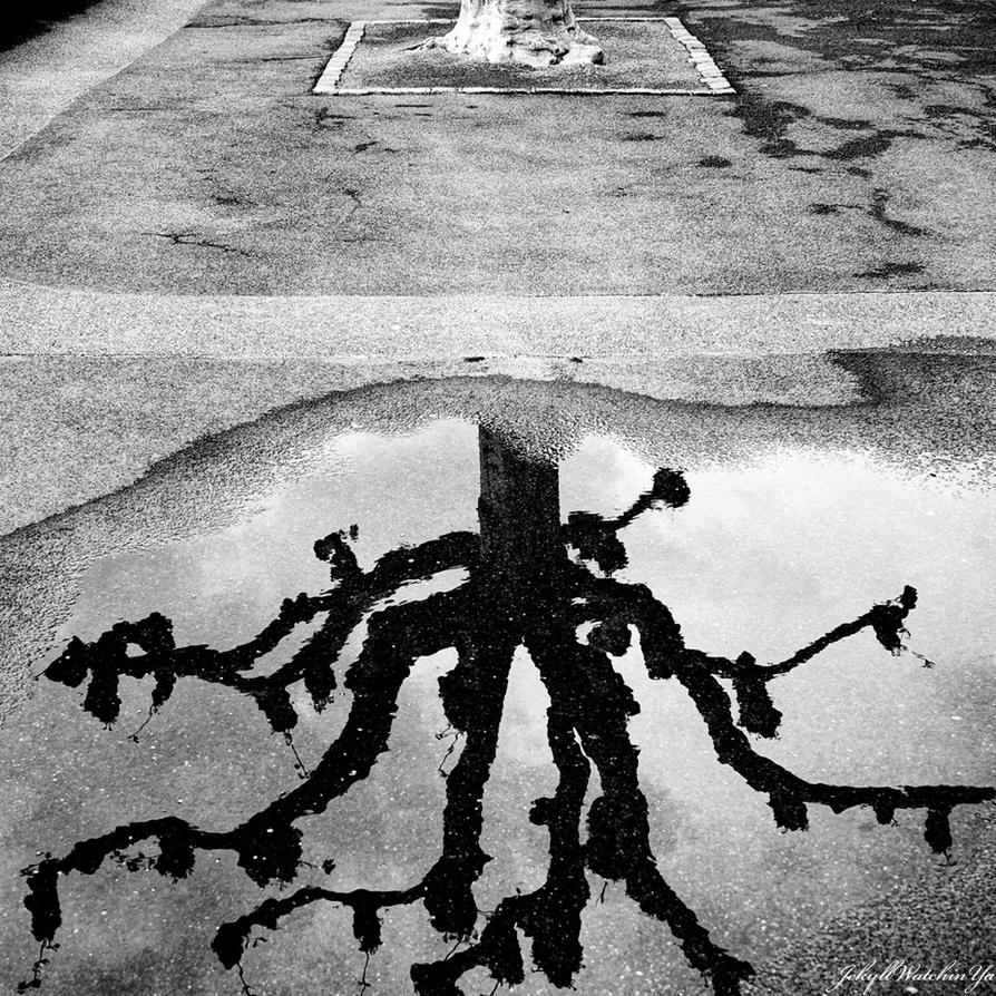 City Tree by JekyllWatchinYa