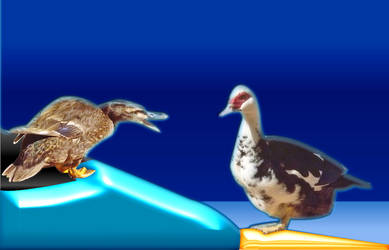 Online Digital Ducks by Chalory