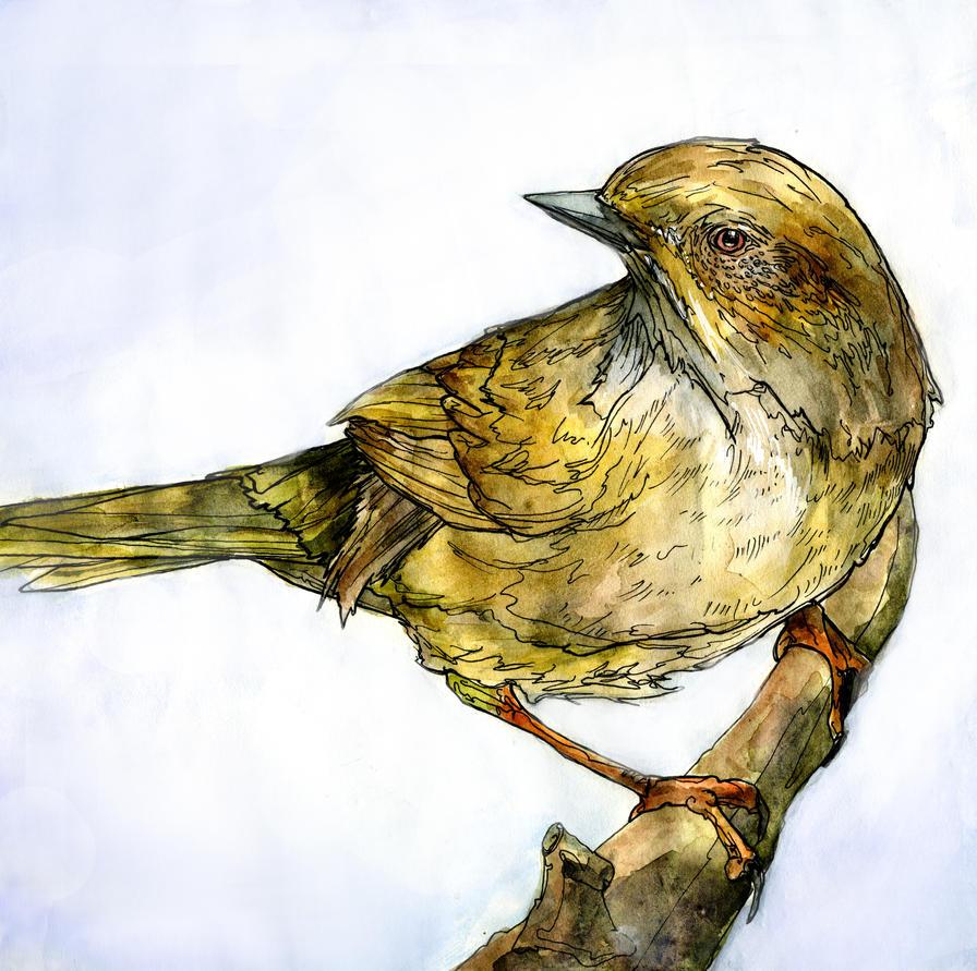 bird by bigredsharks