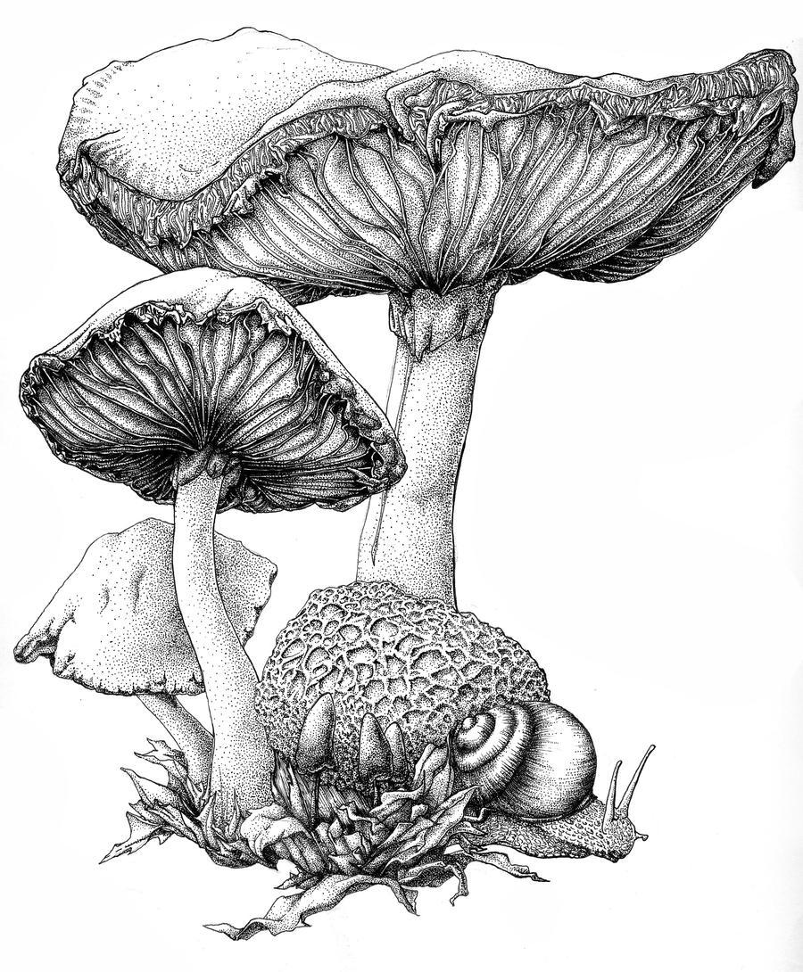 mushroom ink by bigredsharks