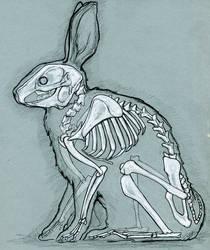 Rabbit anatomy by bigredsharks