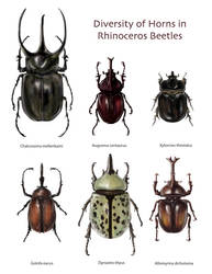 Rhino Beetles by bigredsharks