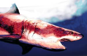 BIg Red Shark