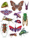 Insect Poster 1